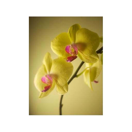 Orchid Photo by Kathryn Reed